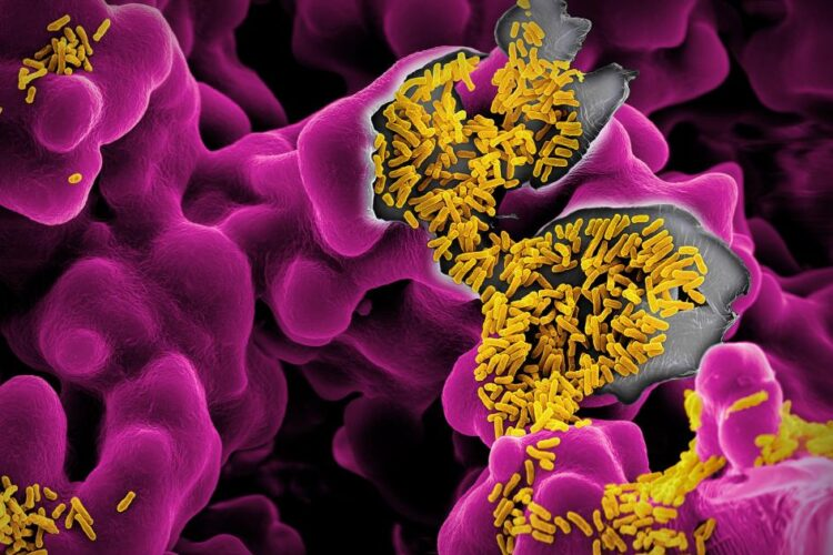 crina coliban probiotice martin oeggerli